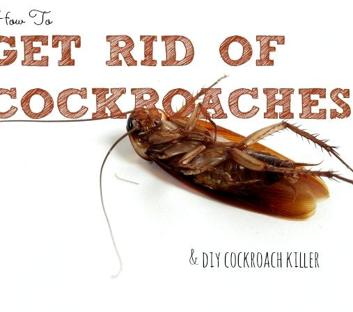 borax recipe to kill cockroaches. Black Bedroom Furniture Sets. Home Design Ideas