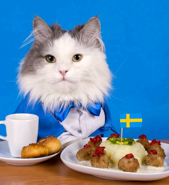 Can cats eat pork pies recipe